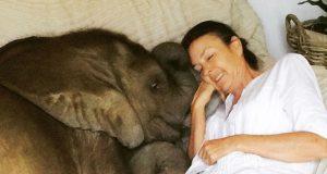napušteno slonče najbolji prijatelj