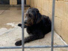 Pas vraćen u azil