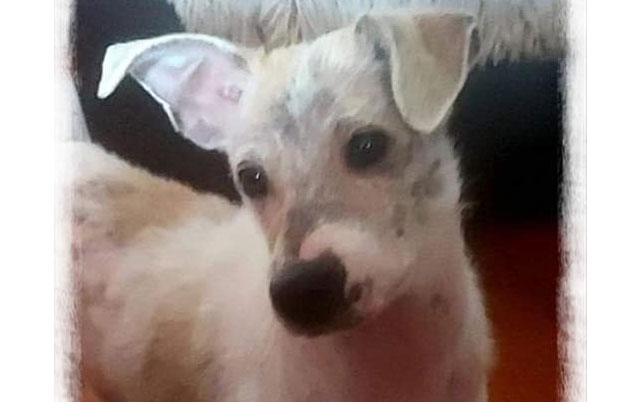 pas Hugo je spašen