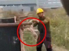 kineski radnici deru mačku