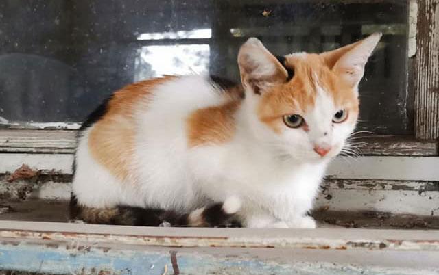 pravo na život mačića