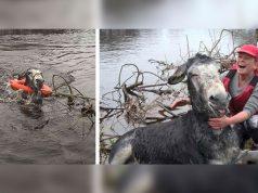 spasavanje magarca iz reke