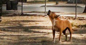 pas čuva kuću umrlog vlasnika