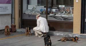 pomaže uličnim psima